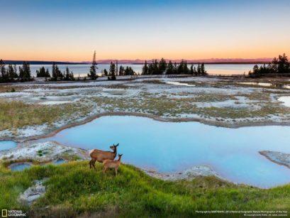 ciervos en hermoso paisaje