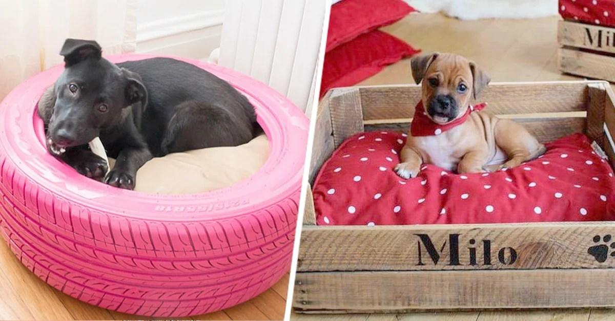15 ideas de camas creativas para perros que querrs ya mismo