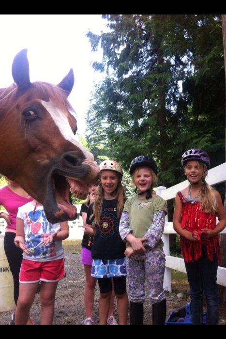 caballo se entromete en una foto