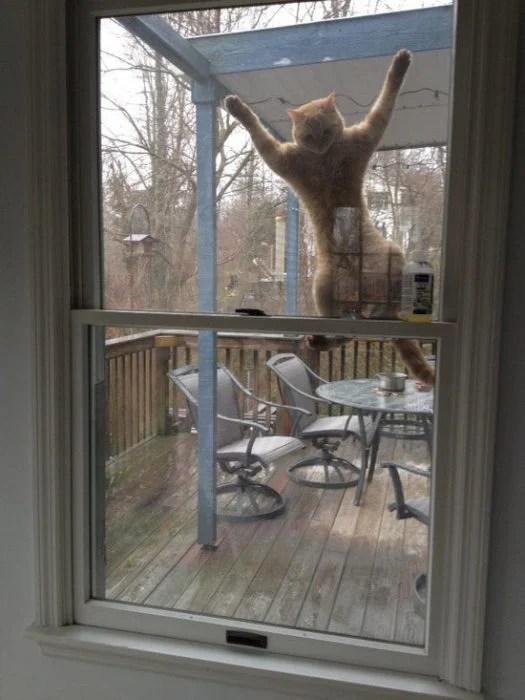 gato en la puerta
