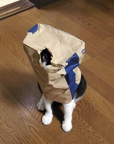 gato enuna bolsa