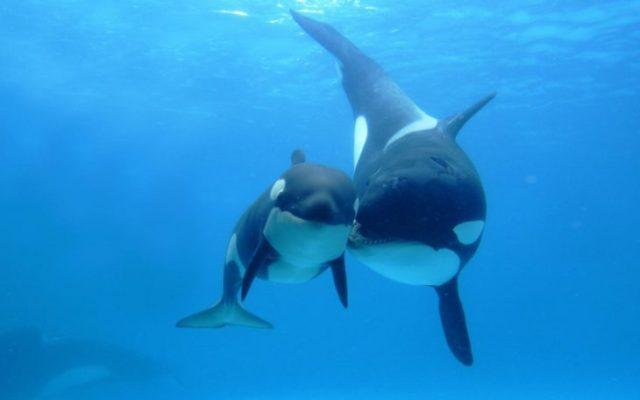 ballena bebe