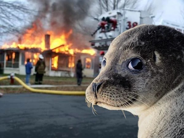 foca niña meme incendio