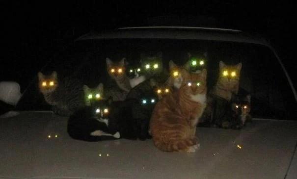 gatos ojos brillantes
