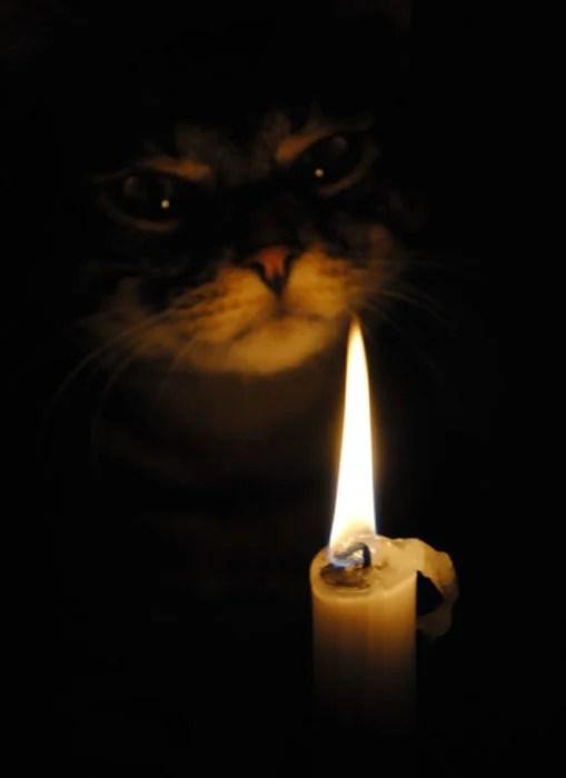 gato ceremonial vela