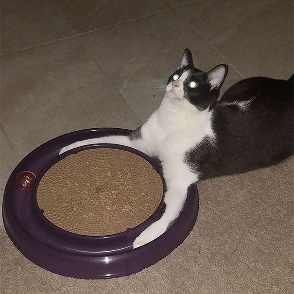 gato pensando enojado