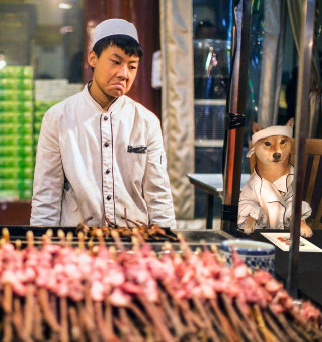 shiba inu perro chefs