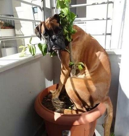 perro escondido en maceta