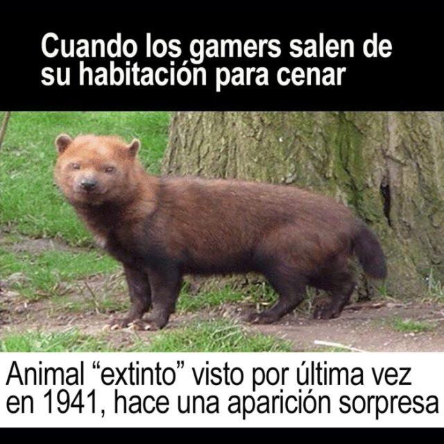 meme animal extinto