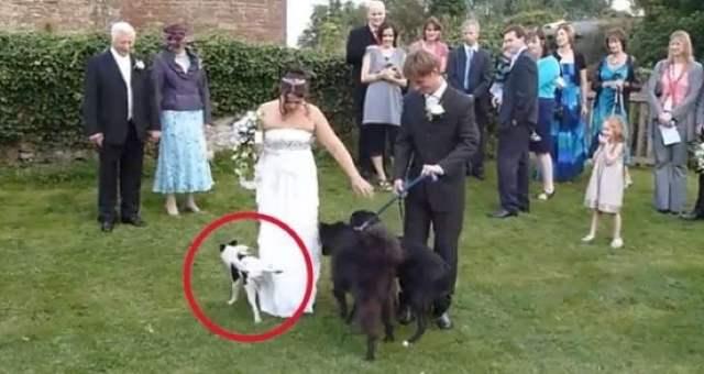 perro a punto de orinar el vestido de la novia