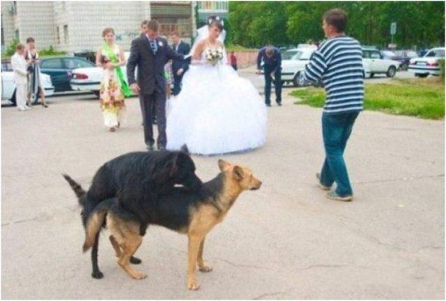 perros montados y los novios atras