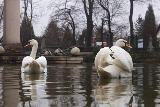 lago con cisnes