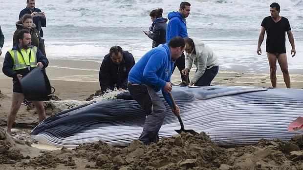 ballena pidiendo ayuda