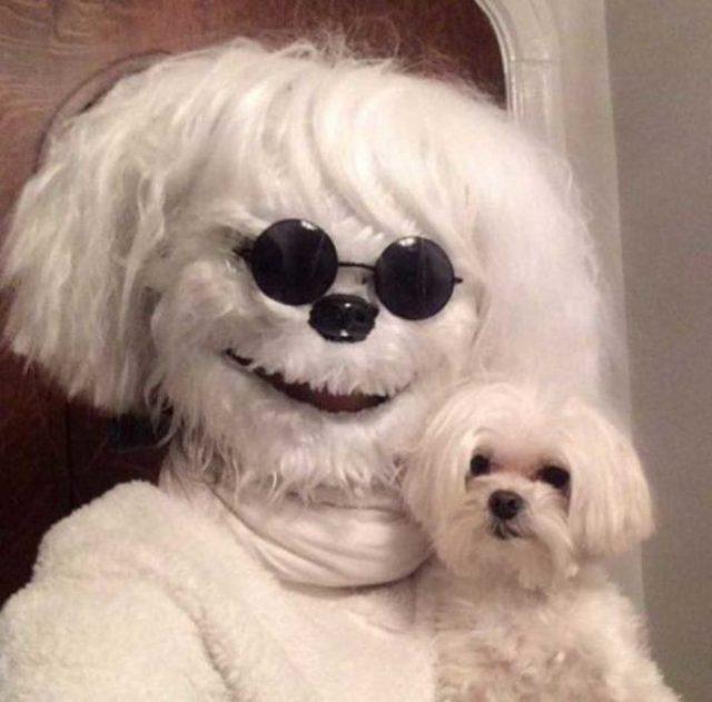 persona disfrazada de chucho cargando un perro