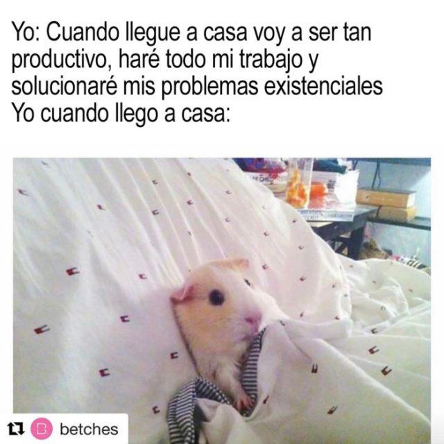 hamster recostado en una cama
