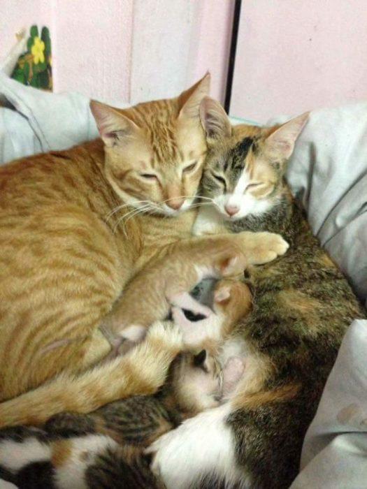 gato familia abrazo