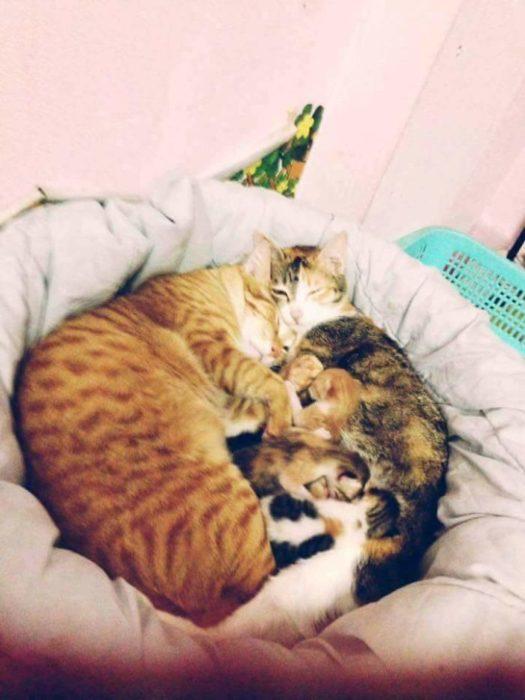 gatos familia gatos recién nacidos