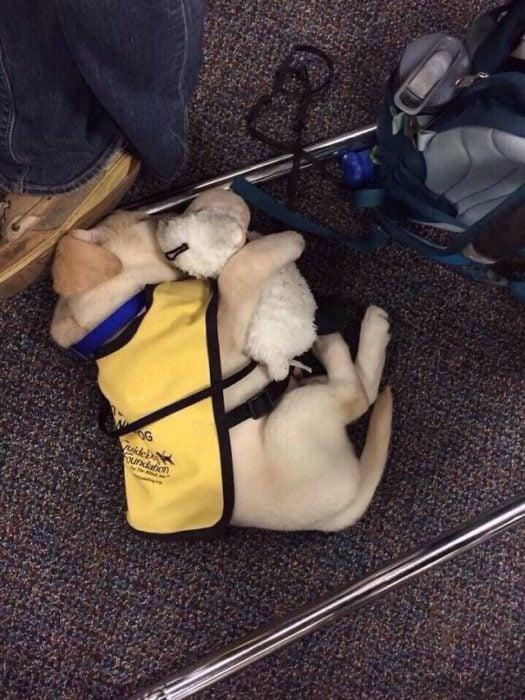 cachorro de servicio abrazando a un chucho de felpa