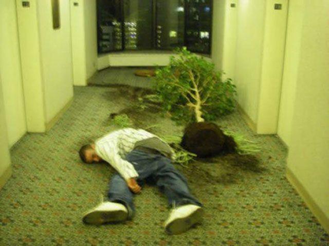 borracho con árbol desplantado
