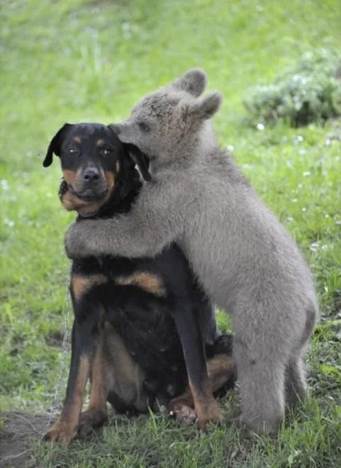 quítate de acá oso, chucho enojado