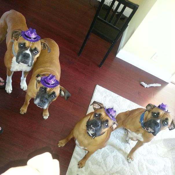 perros sombreros