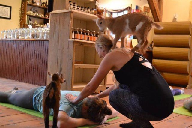 yoga con cabras 7