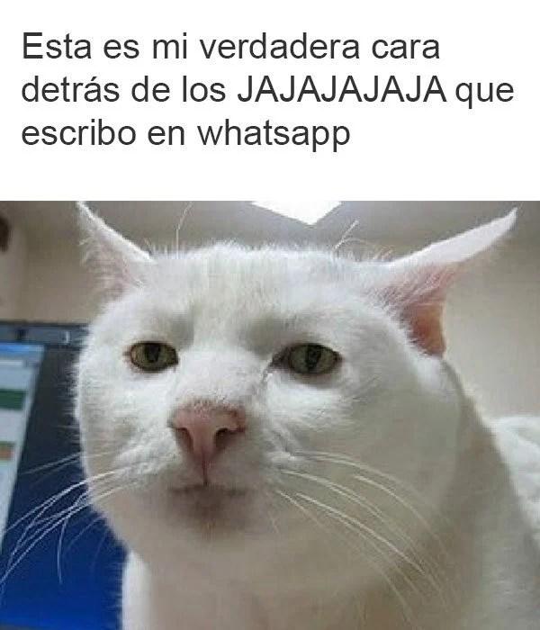 cara de amargado whatsapp jajajaja
