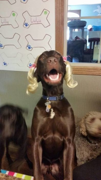 perro coletas niña