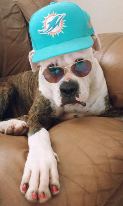 perro disfraz gafas