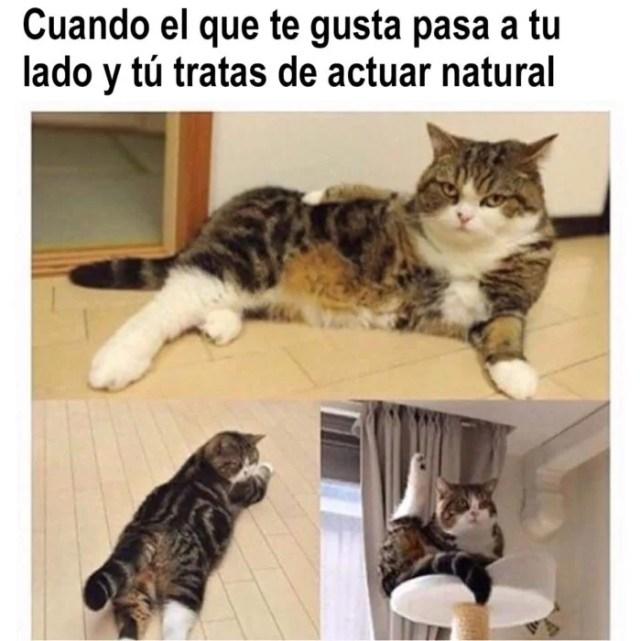 meme de gatito actúa natural