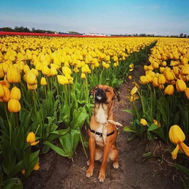 perro en un ámbito de flores amarillas