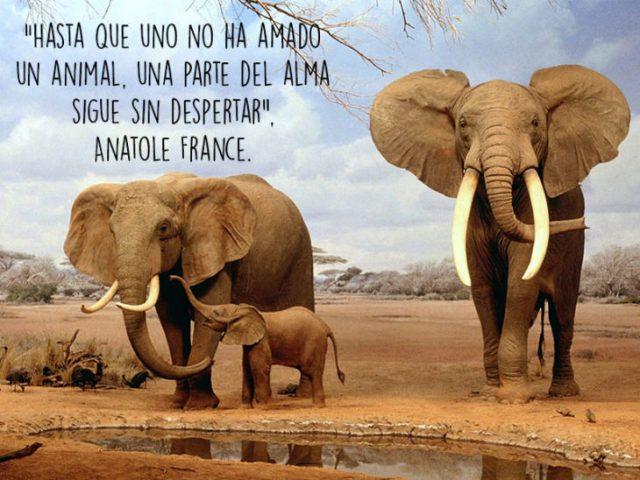 elefantes animales foto oración Natgeo