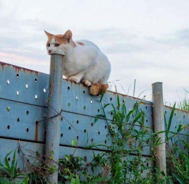 ilusión óptica de un gatito tragando un tubo