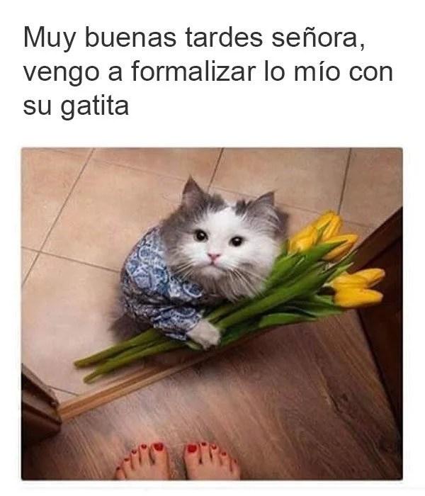 gato flores propietaria traje