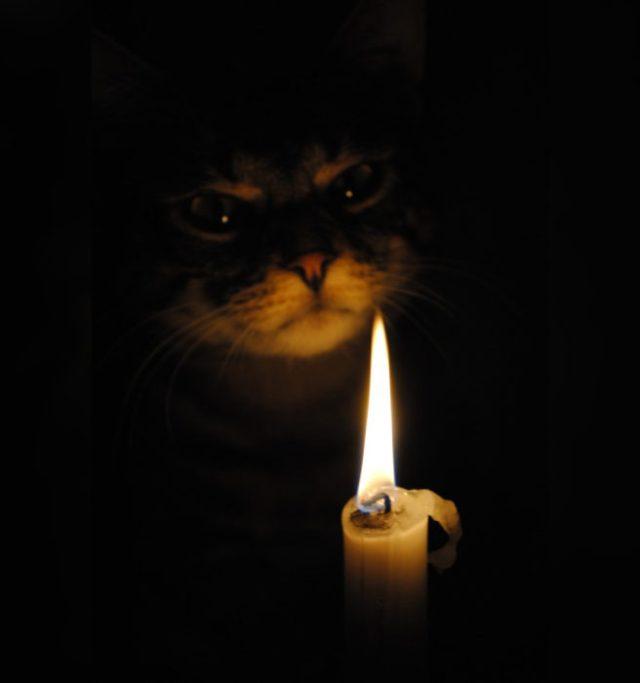 gatos satanicos 11