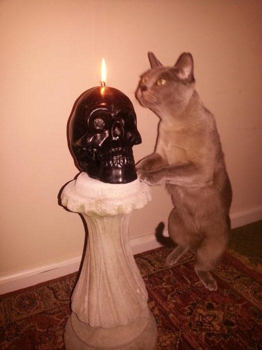 gatos satanicos 6