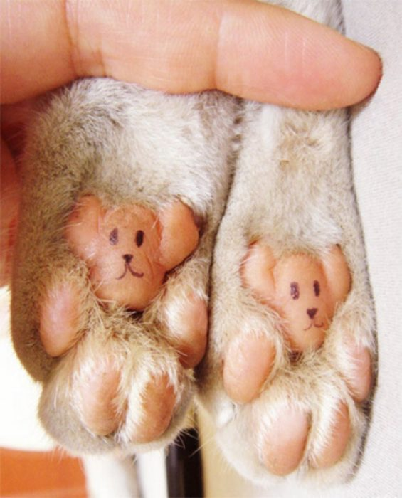 osos en la huellas de gatos