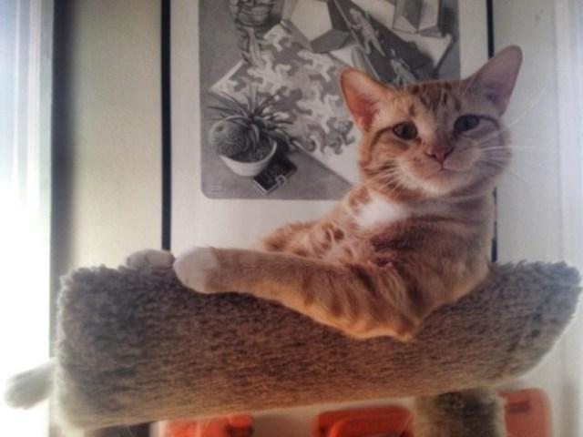 gato feliz sonriendo