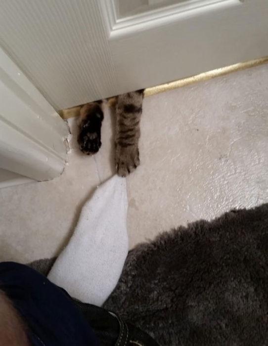 Patas de gatito por debajo de la puerta