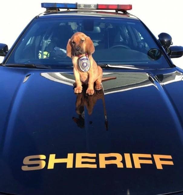 cachorro en cofre de carro de policía