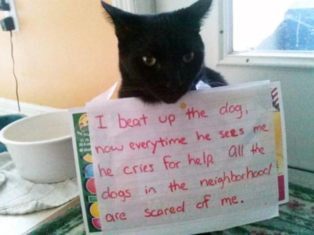 letrero gatito vecino