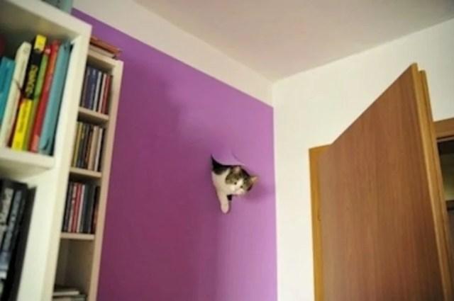gato atraviesa pared