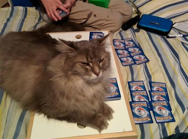 gato sobre mesa donde están jugando