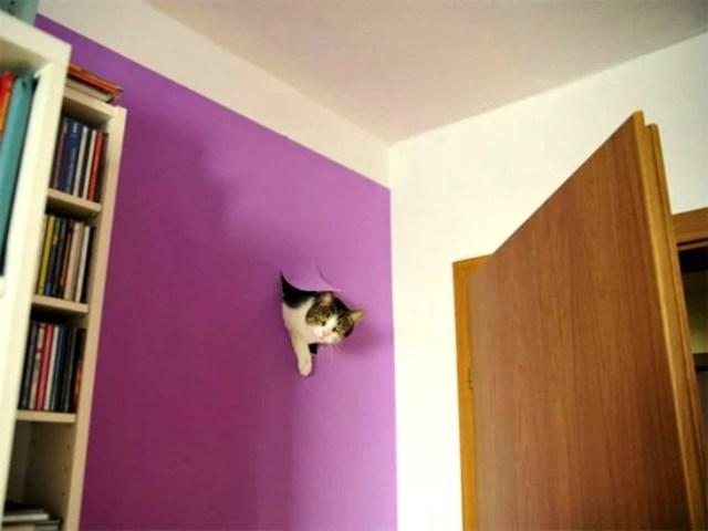 gato rompe pared
