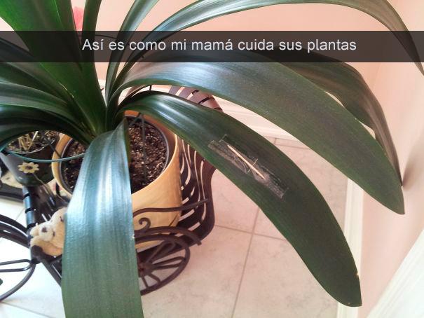 mamá cura sus plantas