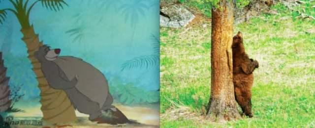 baloo de el libro de la selva en la vida real