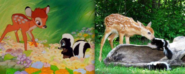 bambi y flor en la vida real