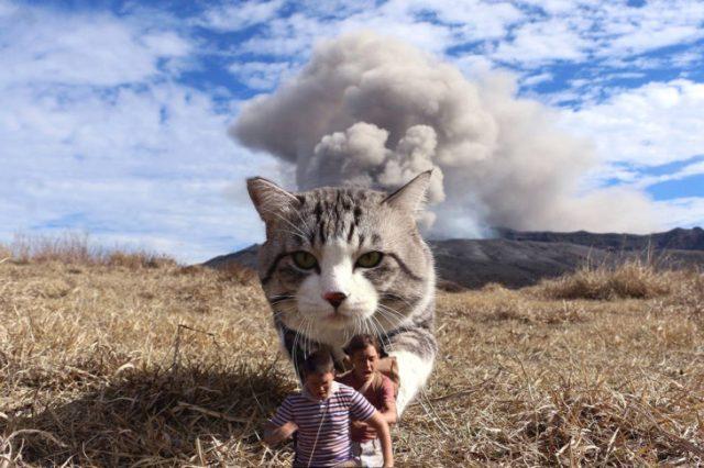 humanos editados niños frente a un gato