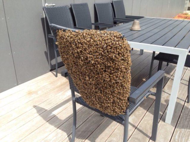 Silla de abejas