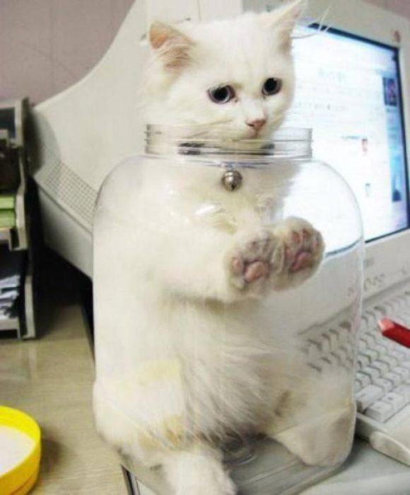 gato en frasco